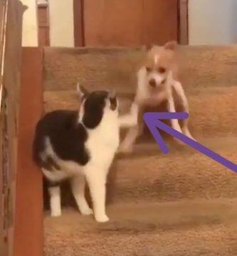 perro gato turbo
