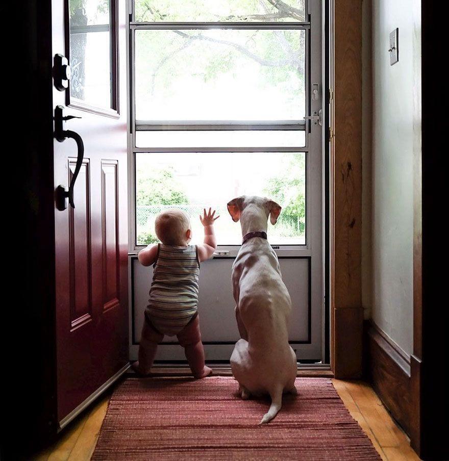 perro-maltratado-amigo-bebe2