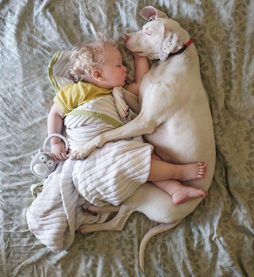 perro-maltratado-amigo-bebe4