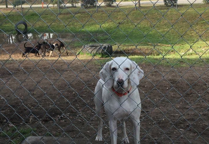 perro-vuelve-refugio-04