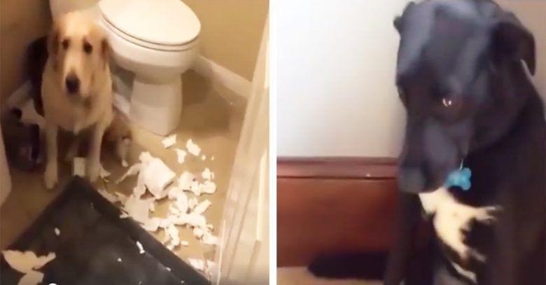 perros-culpables