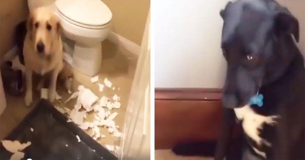 Estos perros han hecho más de una travesura y tienen la reacción más divertida cuando se dan cuenta de su error