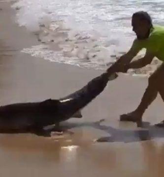 rescate tiburon