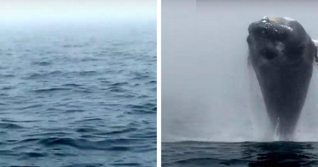 El salto de una ballena jorobada