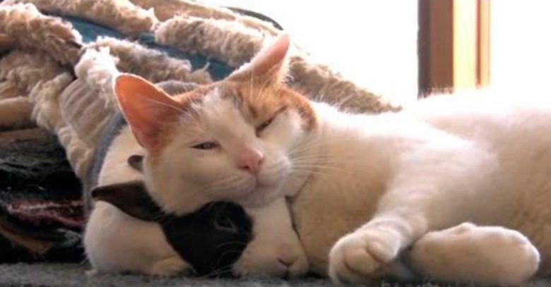 gato-amigo-conejo-dest