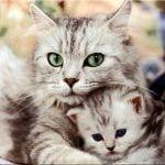 gatosyglobos 1