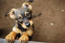 Este perro transforma su mirada