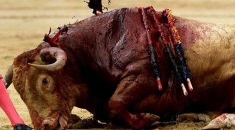 toro sufre