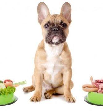 img comida perros ingredientes importantes art