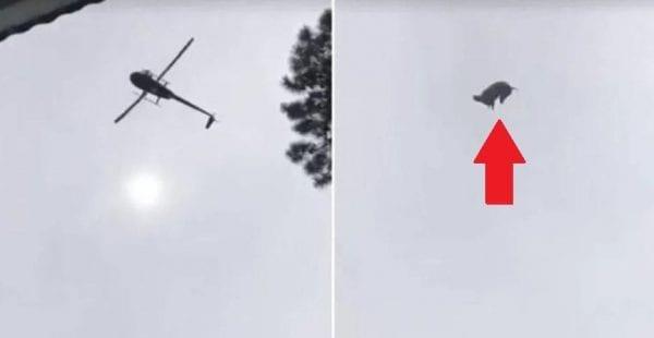 cerdohelicoptero2