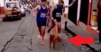 maratonista patea perro