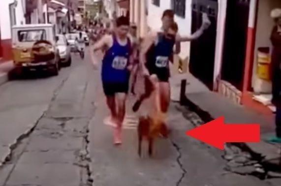 maratonistapateaperro