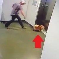 perro elevador