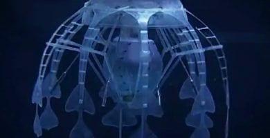 ¡El Robot medusa!