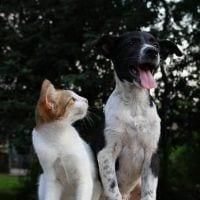 coronavirus en perros y gatos
