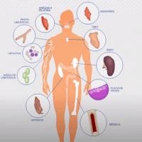 sistema imunologica portada