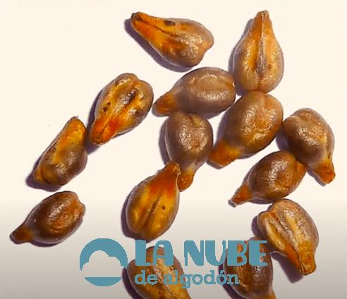 El aceite de semilla de uva, beneficios en la estética y la nutrición