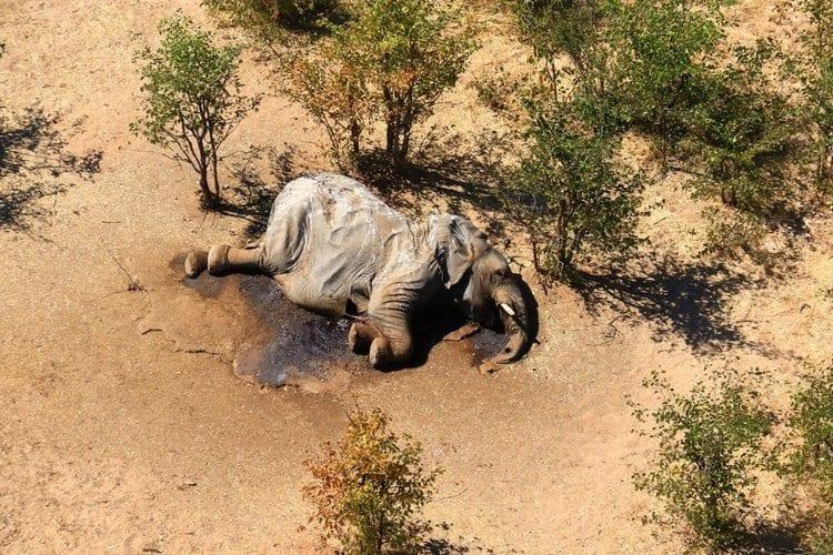 Cientos de elefantes mueren de forma repentina y sin signos de violencia