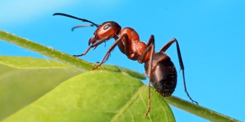 Hormigas las incansables trabajadoras
