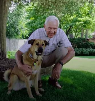 perro ancianos portada