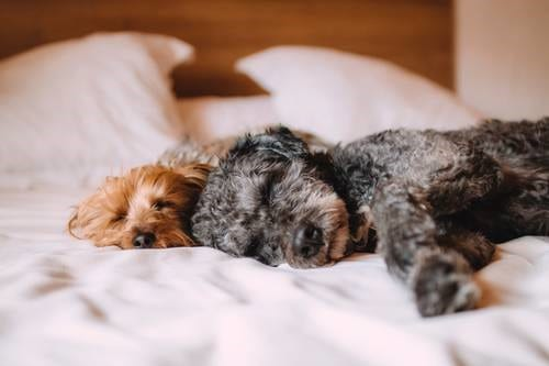 ¿Porque los perros duermen tanto?