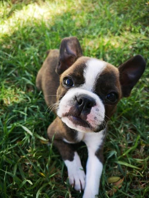 perro hierba