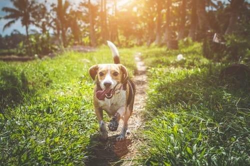 ¿Quieres saber por qué jadean los perros?