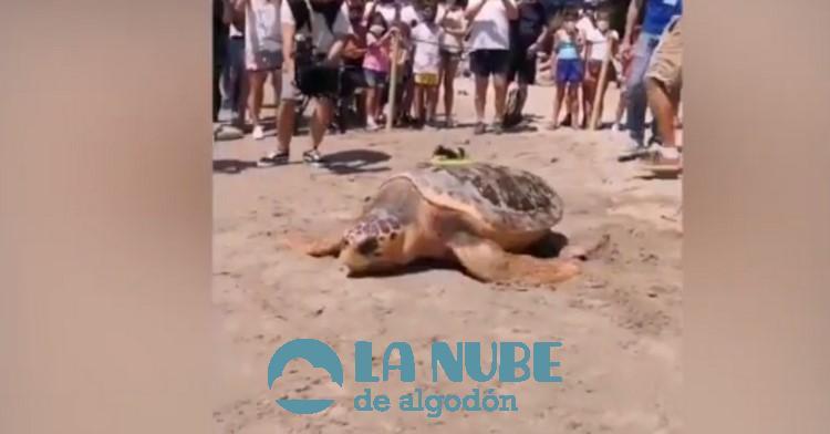 Colomera la tortuga que viaja nadando desde Espana hasta Grecia tras ser curada