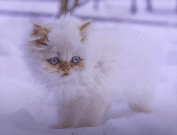 ¿Por qué tu gato siempre quiere salir de noche?