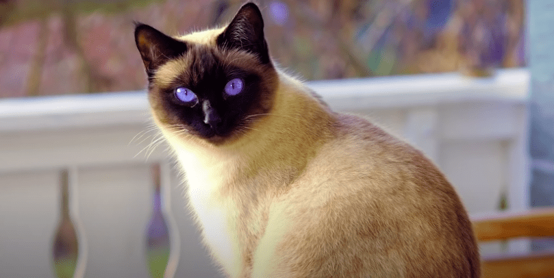gato amor1