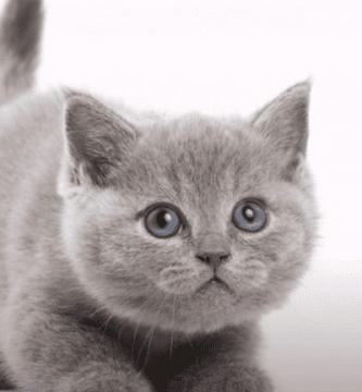 gato bonito2