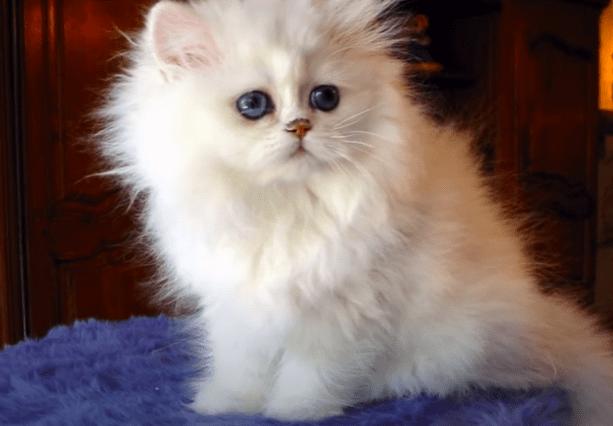 gato bonito3