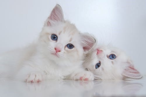 gato comida new