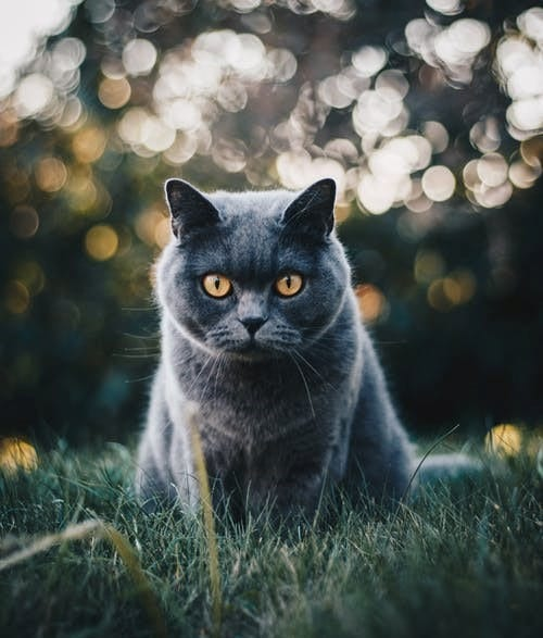 gato comportamiento