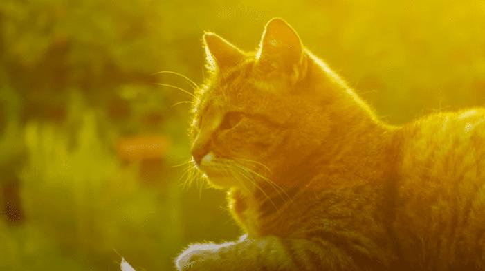 gato comportamiento 1