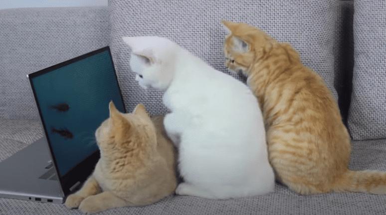 gato listo 1