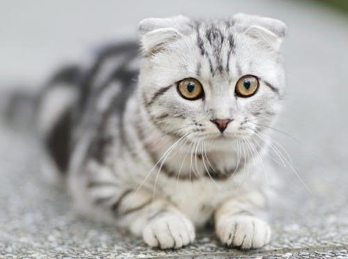 gato obedecer