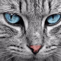gato triste 1