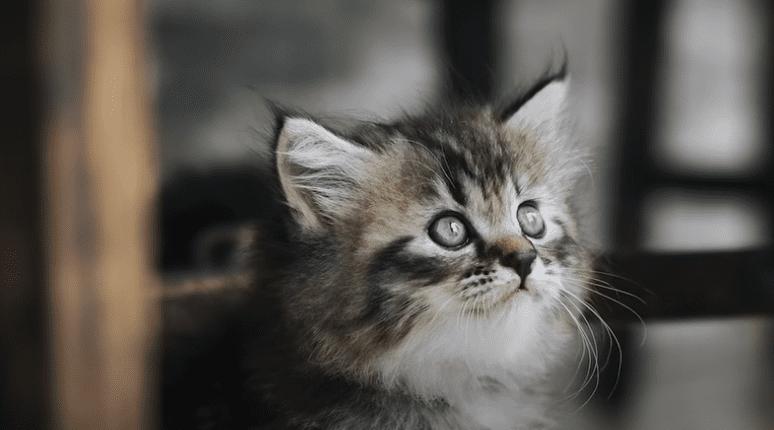 gato triste 2