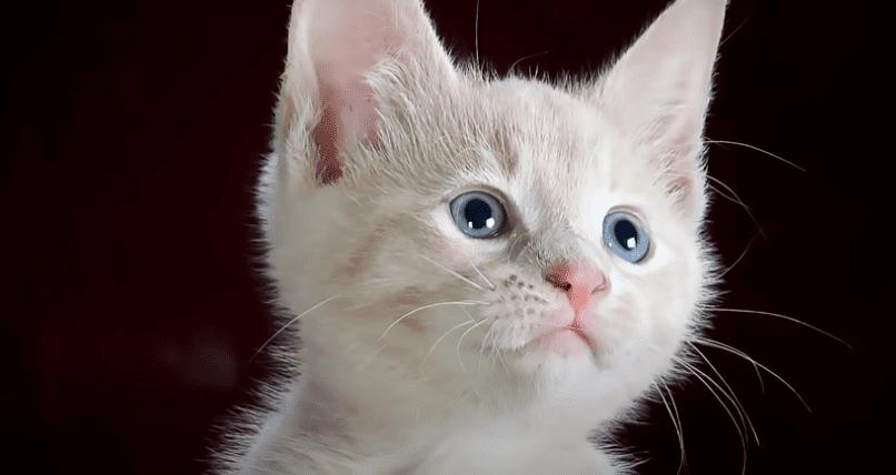 gato triste 3