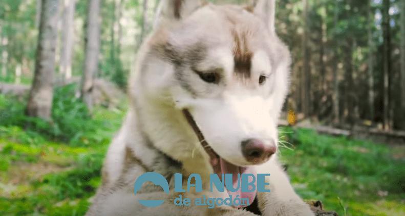 10 razas de perros más bonitas