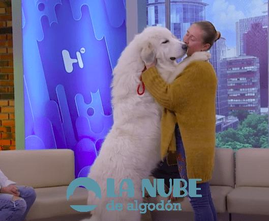 perro pirineo 1
