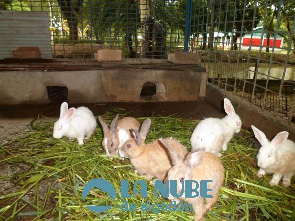 conejos3