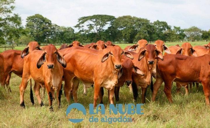 Guía cría de vacas