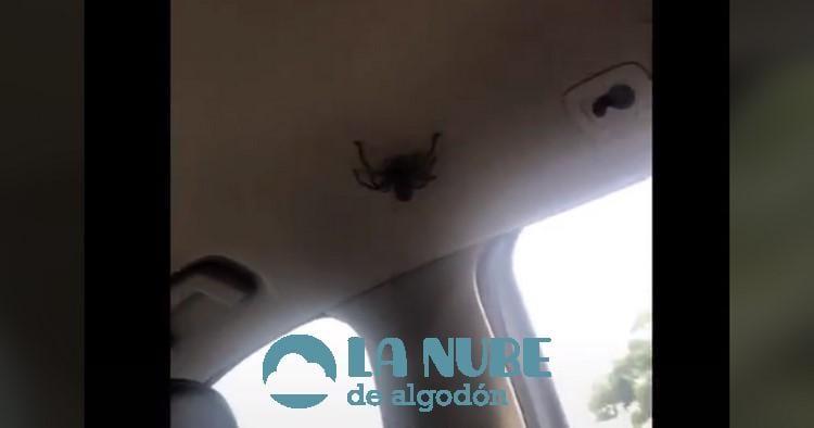 Abandona su coche en la carretera al ver una arana en su interior b