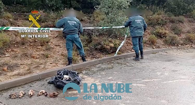 El Seprona encuentra cientos de cadaveres de animales en Montezarzuela b