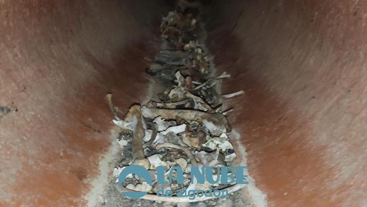 El Seprona encuentra cientos de cadaveres de animales en Montezarzuela