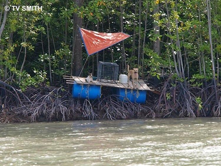 El canibalismo en la isla de los perros abandonados
