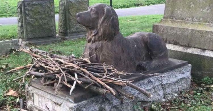 Rex el perro que sigue recibiendo palos despues de 100 anos