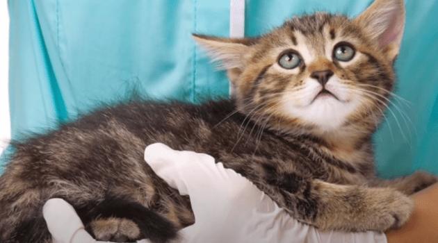 gato babea1